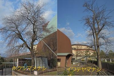 立ち木仕立て 比較 sml.jpg